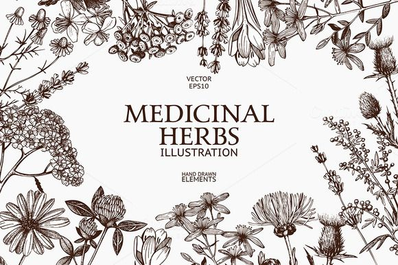 Vector set of vintage medicinal herbs illustration. Ink hand drawn sketch collection. You will get: 1 EPS file - vector collection of herbs illustration 1 EPS file - vector seamless pattern