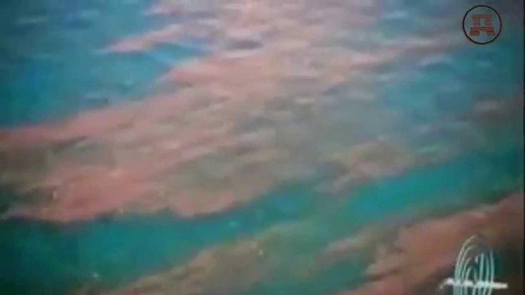 Globální oteplování = globální otupování. Globální oteplování je lež. Jsou to normální objektivní procesy. Mnohém horší a reálné je použití klimatických zbraní (geo-fyzických). Obrovská katastrofa v Mexickém zálivu = precizně naplánovaná a provedená operace. Nejhorší na tom byla ne tolik ta ropa, jako použité chemikálie a mikroorganizmy.