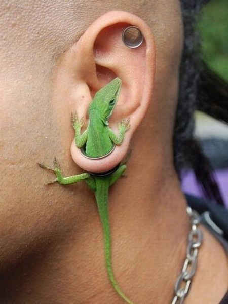 gecko earrings??? (reminds me of the hummingbird magnets where each side is stuck on a window, makes it look like the bird is flying through the window.)