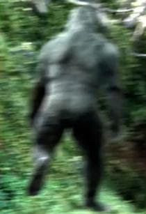 Most+Recent+Bigfoot+Sightings | This New Bigfoot Photo From Georgia Looks More Impressive Than Patty