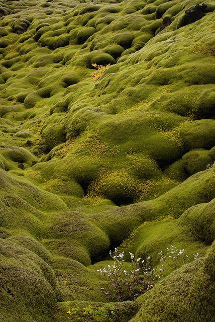 Björgólfur Hávarðsson - Moss-covered lava field in Iceland