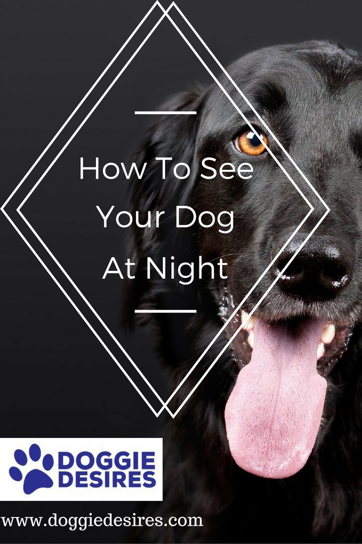 How to see a dog at night >> http://doggiedesires.com/how-to-see-your-dog-at-night/