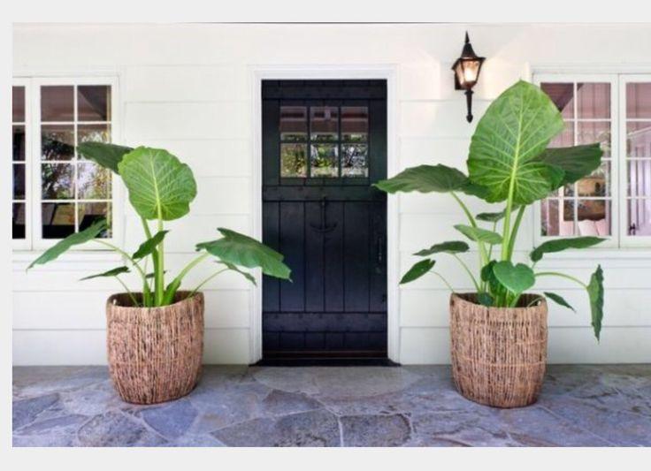 Entrance gardening