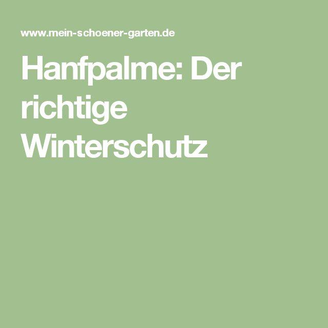 Hanfpalme: Der richtige Winterschutz