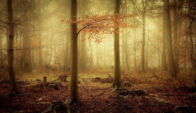 woodsmystery2