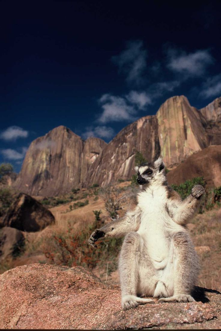 Lemur in Tsaranoro Valley - Madagascar …