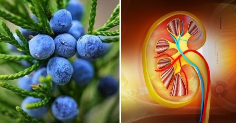 Bacche di Ginepro – Disintossica i reni e disinfetta le vie urinarie