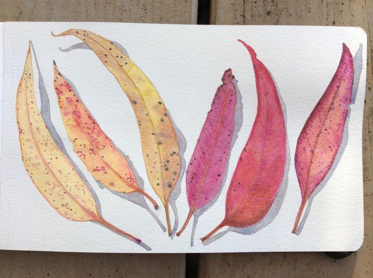Dried eucalyptus leaves in watercolor