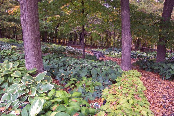 How to Garden Under Trees