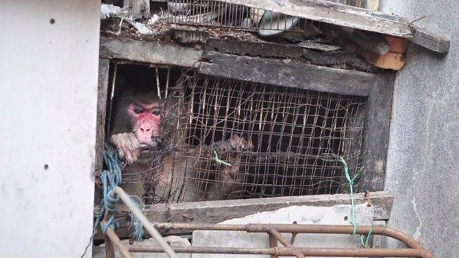 A monkey who lived in a dark hole in Thailand has been rescued by a wildlife foundation.