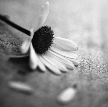 Olor-Flor marchita