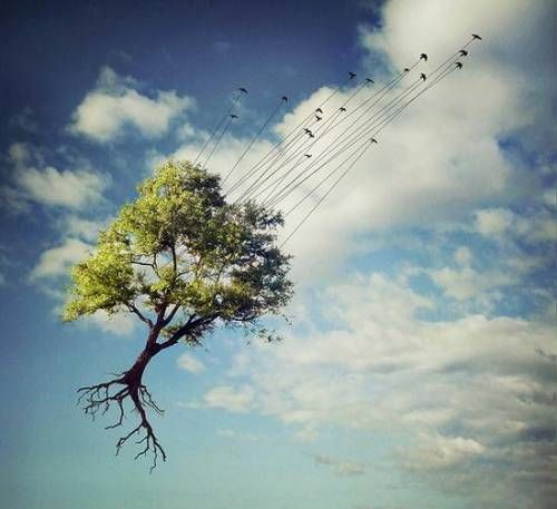 Photo by Sarolta Bán. Have tree, will travel. Very appealing... see more....  http://myfavoritecollection.blogspot.com/2010/12/amazing-photos-by-sarolta-ban.html#