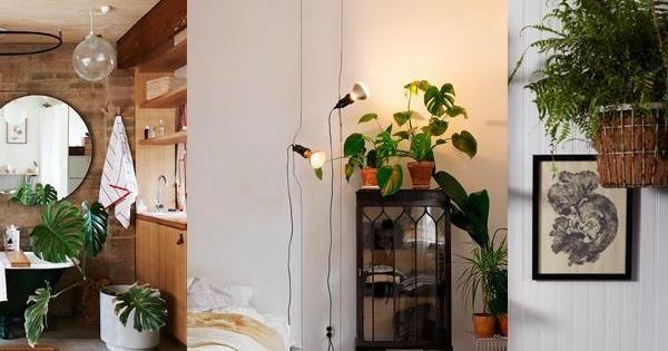 3 plantas de interior que necesitan poca luz