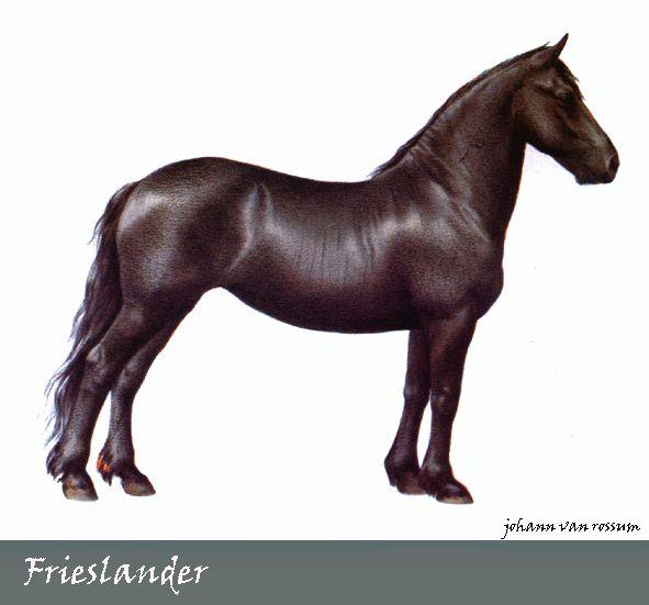Frieslander