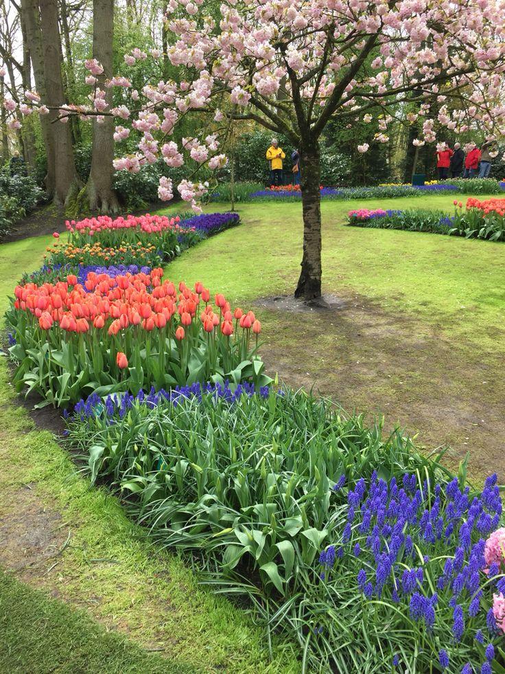 Parque Keukenhoff na Holanda