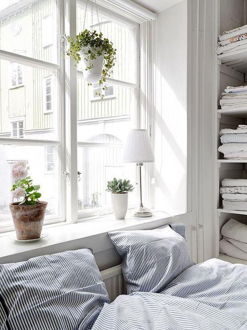 Plants on the windowsill