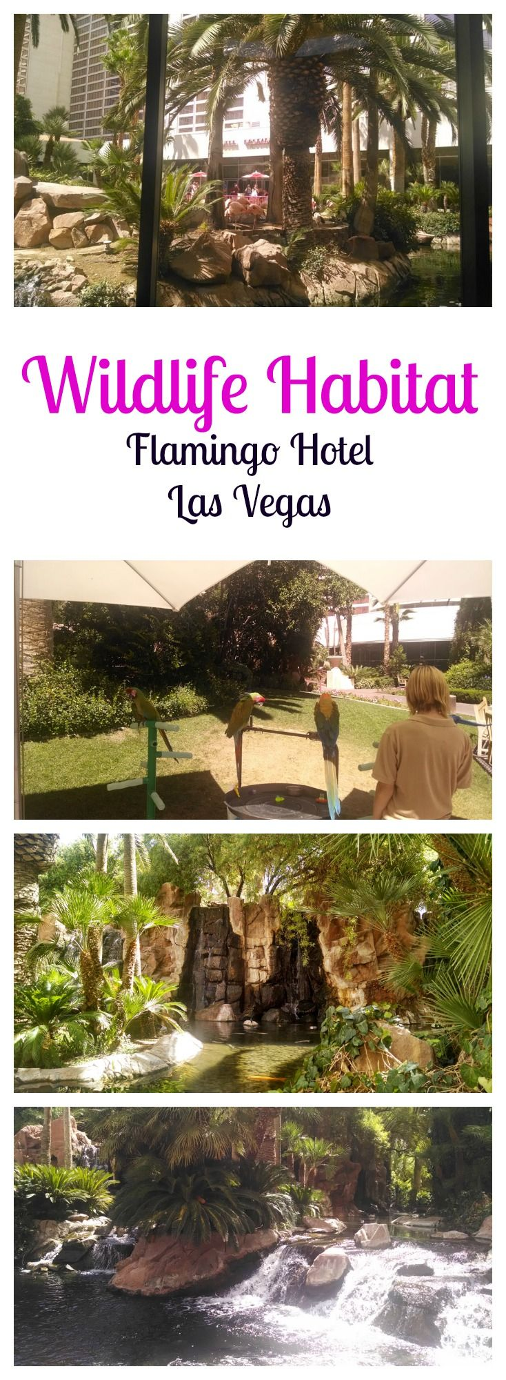 The Flamingo Wildlife Habitat in Flamingo Hotel Las Vegas
