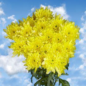 Pom Poms Yellow Cushion 144 Flowers - http://yourflowers.us/?p=6041