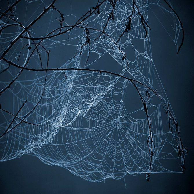 Moonlight on spider webs Spiders Web, Tangled Web, Spider Webs, Nature, Spiderweb, Beautiful, Art, Spiders Man, Black Hats