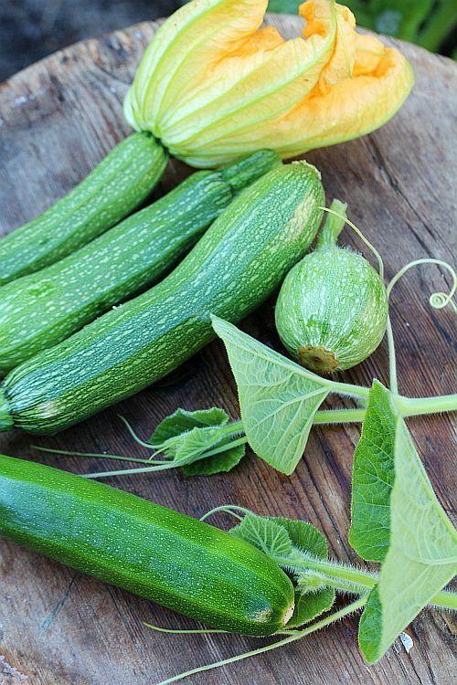 Harvest of summerzucchini.
