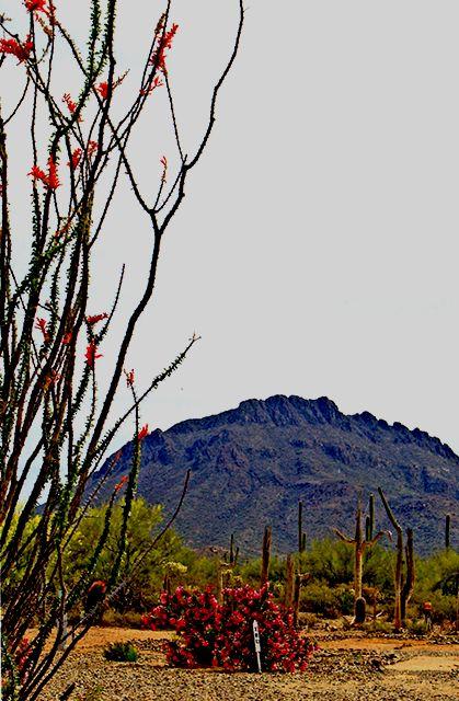 Justin S Diamond J Rv Park Tucson Az Passport America