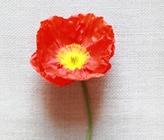 Orange Wedding Flower Guide
