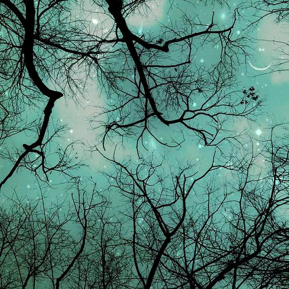 Looking up from the forest floor: Inspiration, Tree, Nature, Starry Night, Stars, Art, Teal, Night Sky, Photography