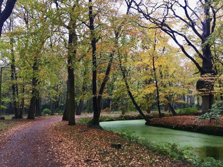 #sundaymorning #walking #clingendael #autumn #autumnleaves - from Instagram
