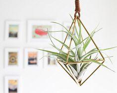Brass air plant holder