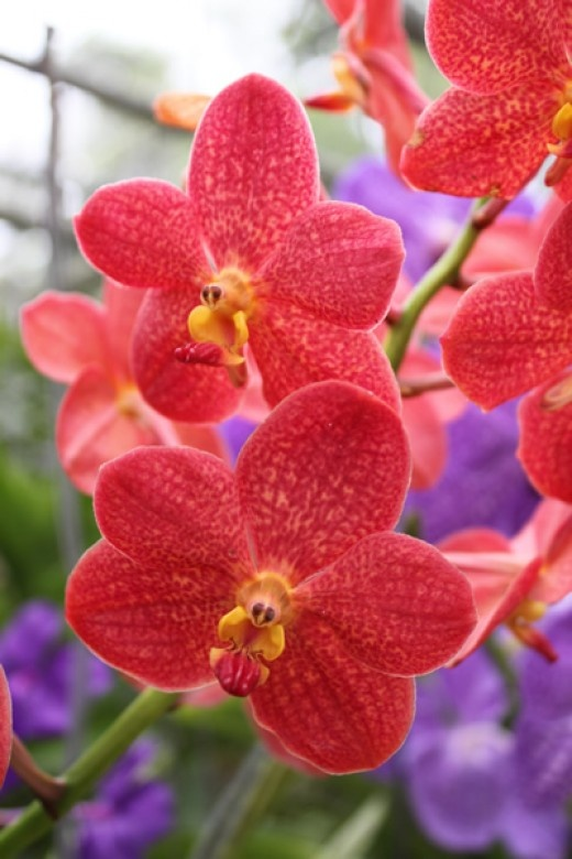 Amazing Orchids from South East Asia