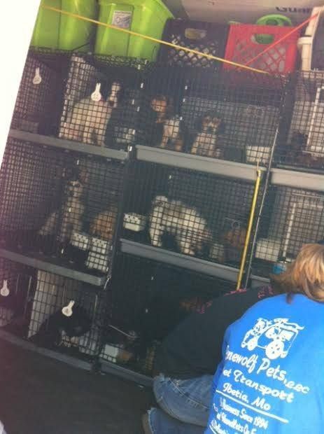 The Puppy Mill Project provided this photo of puppies being delivered to Pocket Puppies.  Don't shop. Adopt.  Don't support the heinous puppy mill industry.