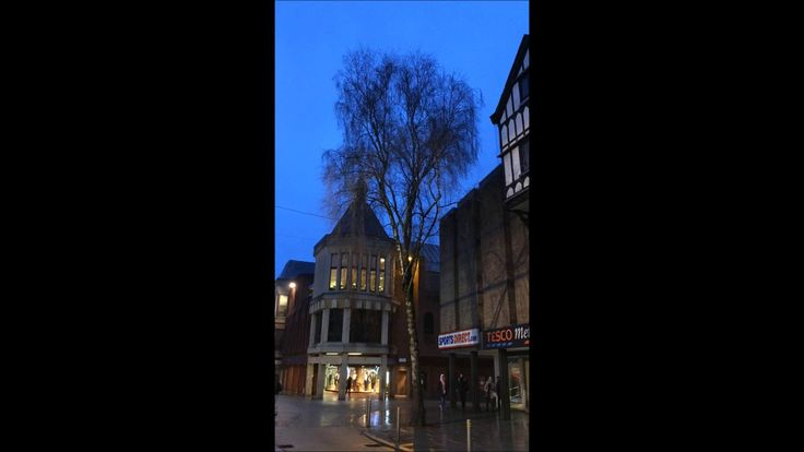 Silver Birch (Betula pendula) tree in the High Street of Exeter - January 2018