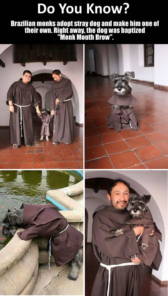 God Spelled Backwards Is Dog. A Stray Dog Becomes A Monk.