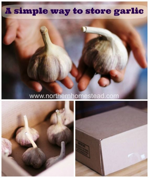 How to preserve garlic? Garlic can simply be stored for a long time. Learn how to store garlic.