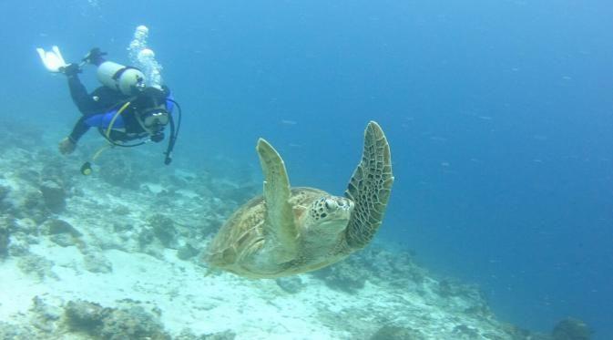 Pantai Pinang Selayar Panorama Alam Bawah Laut yang Mempesona - Sulawesi Selatan