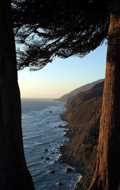 Monterey Cypress - Ragged Point, California