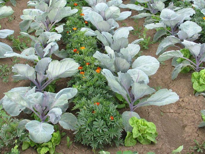 Vegyes kultúrák, hogy a növények jól fejlődjenek. | Családok Jövőjéért Egyesület