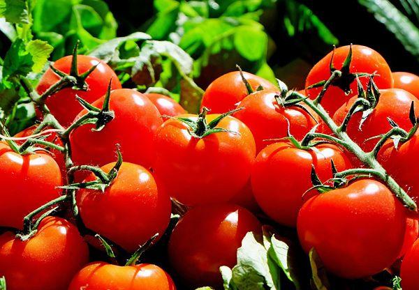 Stroke är ett samlingsnamn för hjärninfarkt, blodpropp i hjärnan, och hjärnblödning. Det är också en av våra stora folksjukdomar och antalet strokedrabbade unga ökar. Men det finns sätt att skydda sig. Ett av dem är ämnet lykopen, som finns i tomater, vilket i forskning har visat sig minska risken