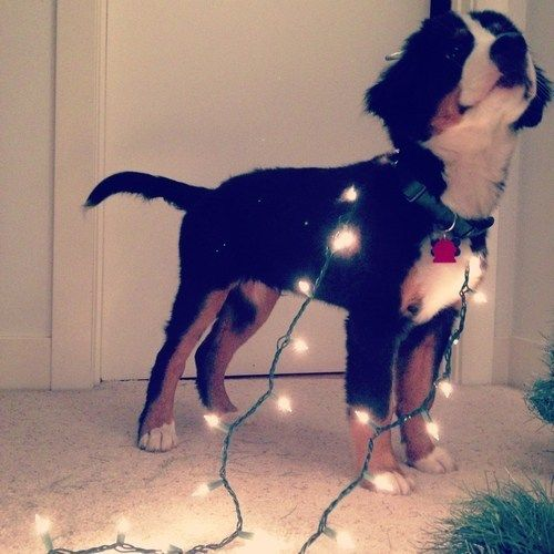 #puppy #lights #dog #sweet