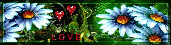 Ромашки анимашки - Красивые цветы - Красивые картинки анимации