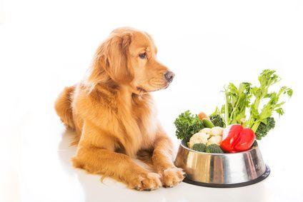 Mineralstoffe sind elementar für die gesunde Ernährung des Hundes - Hundegesundheit Alternativ www.hundegesundheit-alternativ.de
