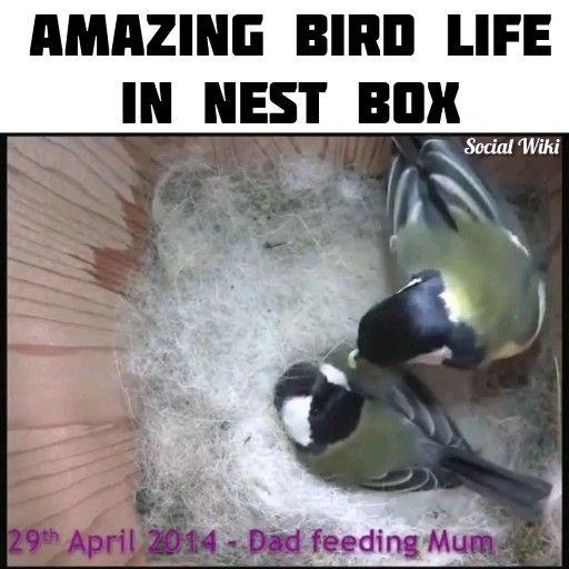 Amazing Bird Life in Nest Box! 🐦