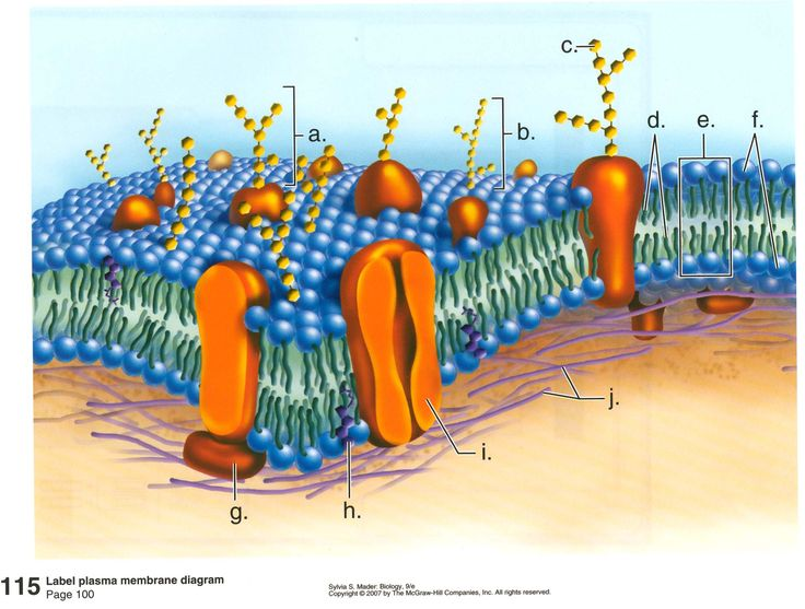 Biology Pictures: Large collection of high quality biology pictures, photos, images, illustrations, diagrams and posters on marine biology, cell biology, microbiology... for educational purposes.