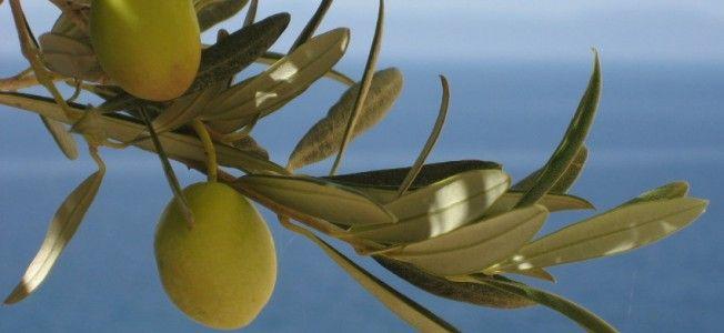 4 secrete din insula Creta pentru o alimentație sănătoasă