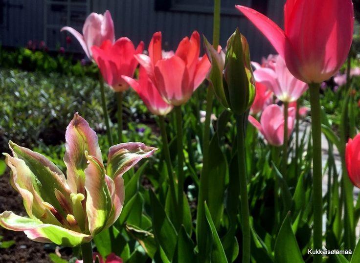 Kukkaiselämää - My Flowering Life : Taidan olla rakastunut...