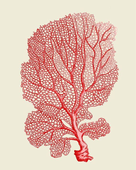 Coral Sea Fan Red  Nautical print sea picture by NauticalNell, $15.00 - this is the kind of highlight accent I want in the room. I'm thinking wood plank ceiling. Dark gray accent wall behind the bed. Neutral walls and coral and aqua accents.