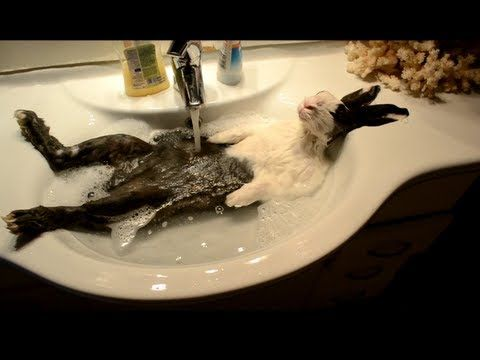I was pretty sure they were washing a dead bunny til it twitched. Bunny takes a shower - YouTube