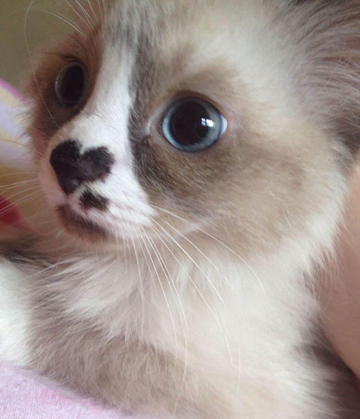 A compilation of the cutest #kittens ever to brighten up anyone's day!