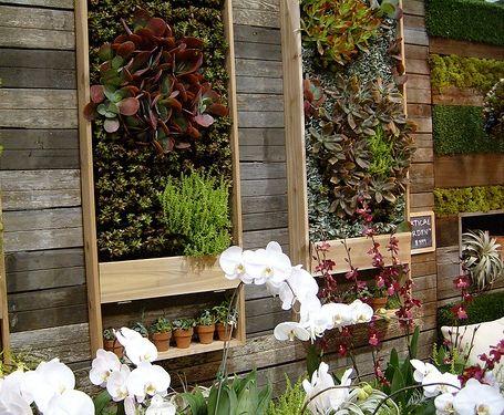 a green wall of succulents w/ shelving below.