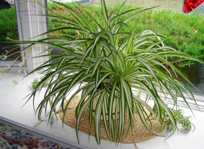 grünlile schattenpflanzen zimmerpflanzen schattig
